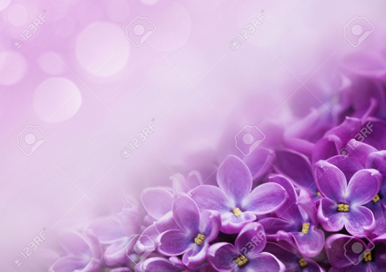 Macro Image Of Spring Lilac Violet Flowers Abstract Soft Floral 1300x917