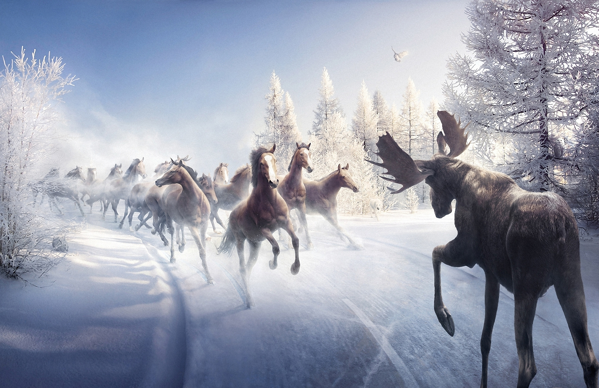 nature landscapes winter snow trees horses moose wallpaper background 1932x1251