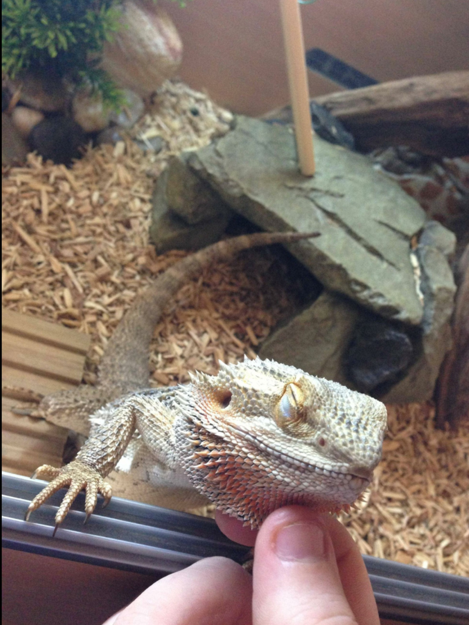 Funny Cat And Bearded Dragon