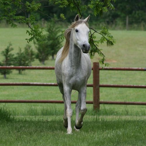1920x1080 White Horse In The Yard Wallpaper 500x500