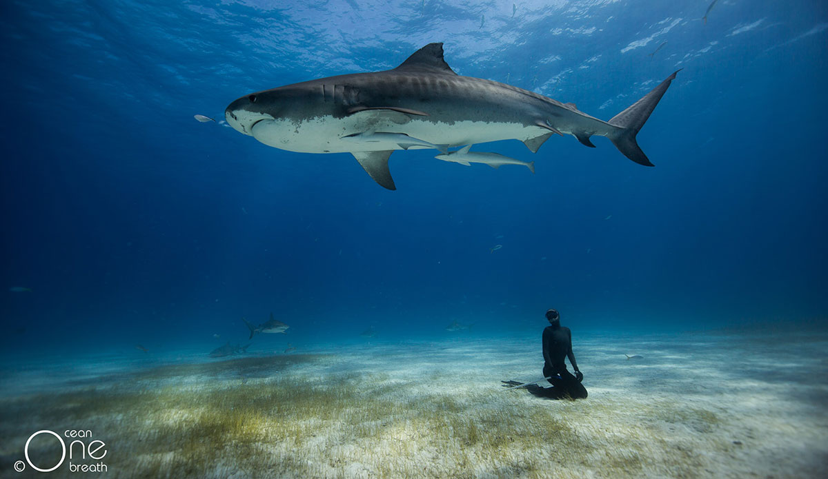 Falling in Love with the Tiger Diving with Tiger Sharks The 1200x695