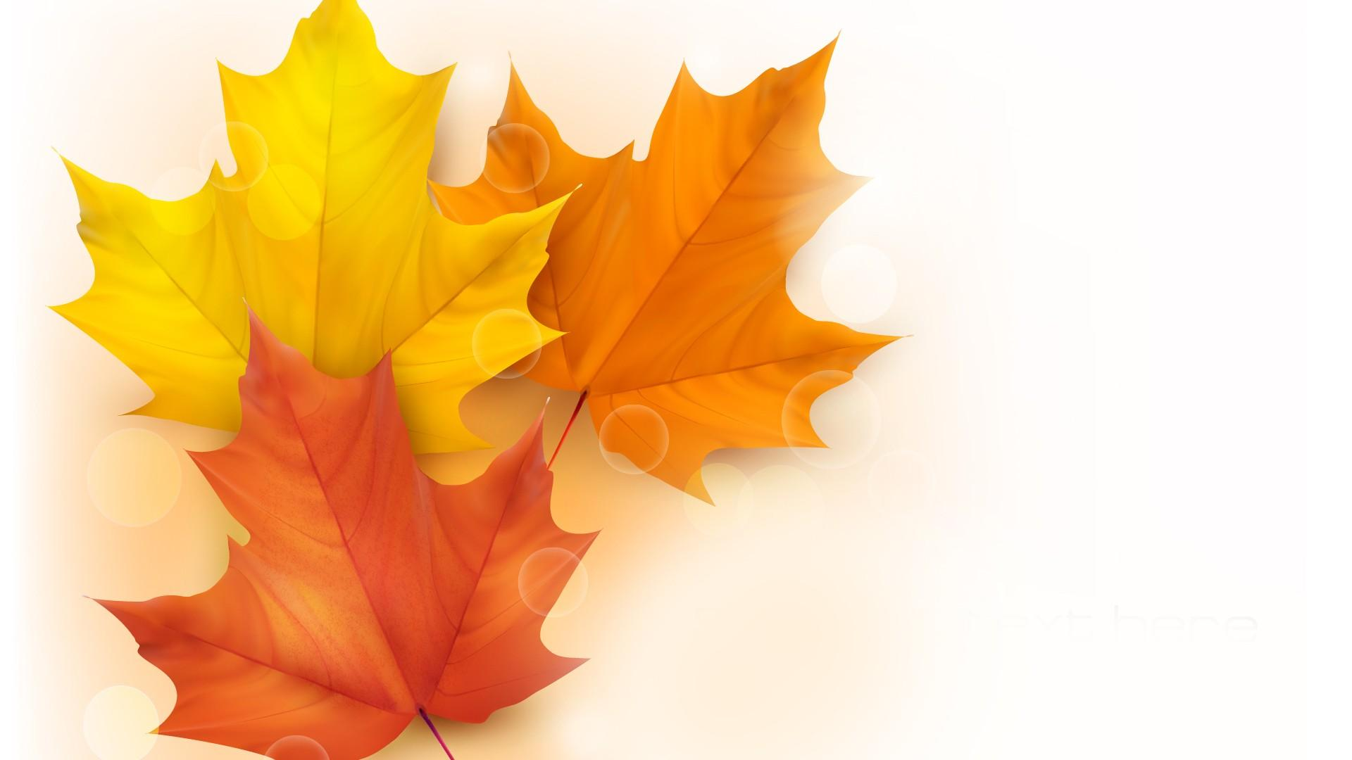 Maple Leaves In White Background Hd Wallpaper Wallpaper List 1920x1080