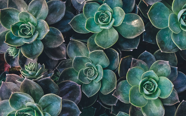 38 Aesthetic Green Pc Wallpapers On Wallpapersafari