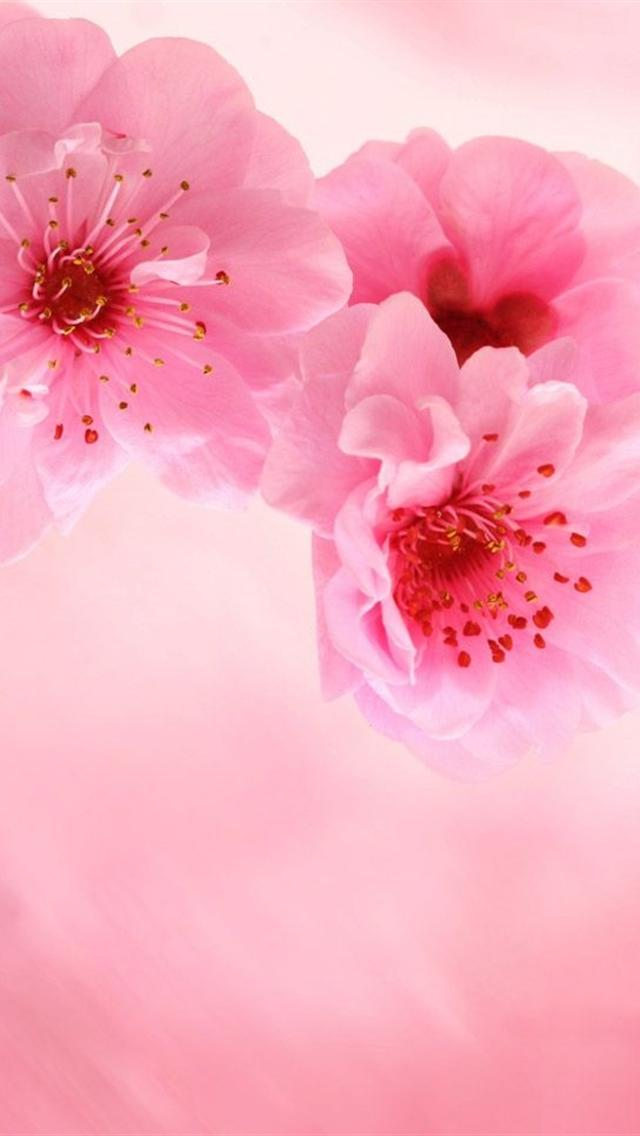 iphone 5 wallpapers hd cute pink flowers iphone 5 background 640x1136