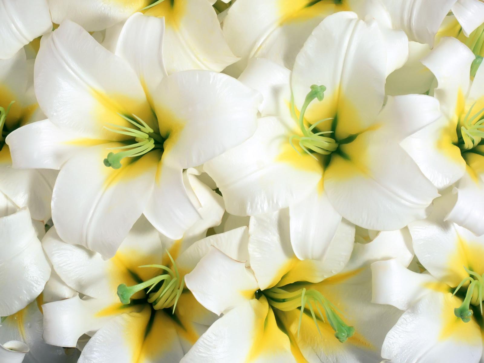 Beautiful Flowers Wallpapers   Latest News 1600x1200