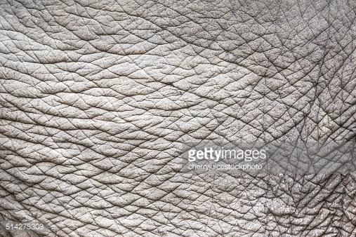 Elephant Skin Background Stock Photo Getty Images 507x338