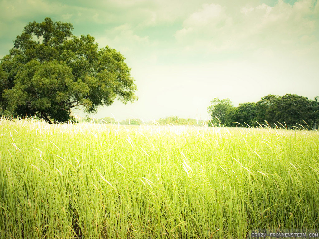 Free summer wallpaper peaceful wallpapersafari - Peaceful background images ...