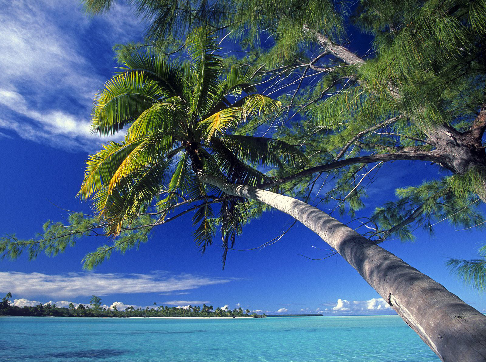 Palm Tree Society Island Beach Wallpaper and make this wallpaper for 1600x1192