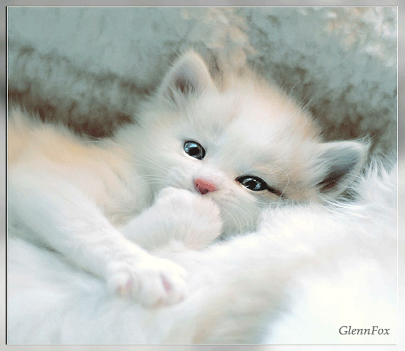 Animal Cat Very Cute Animals Cats HD Desktop Wallpaper 800x693