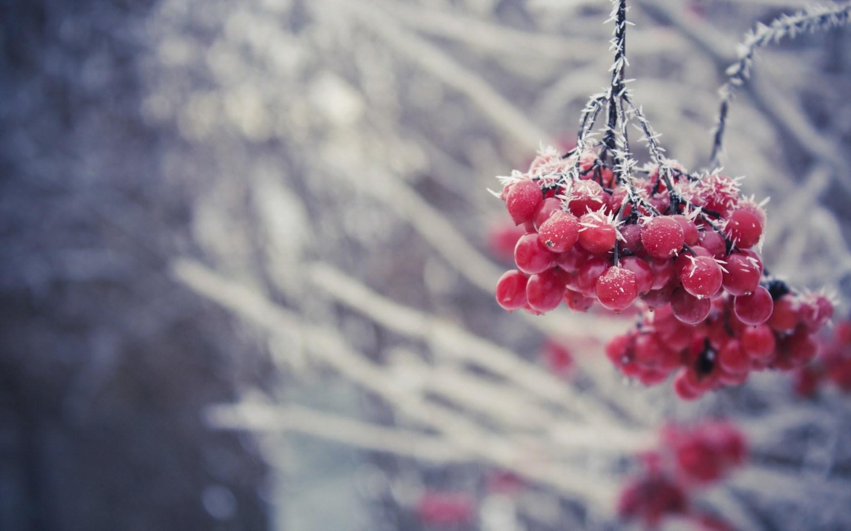 beautiful winter wallpaper   HD Desktop Wallpapers 1680x1050