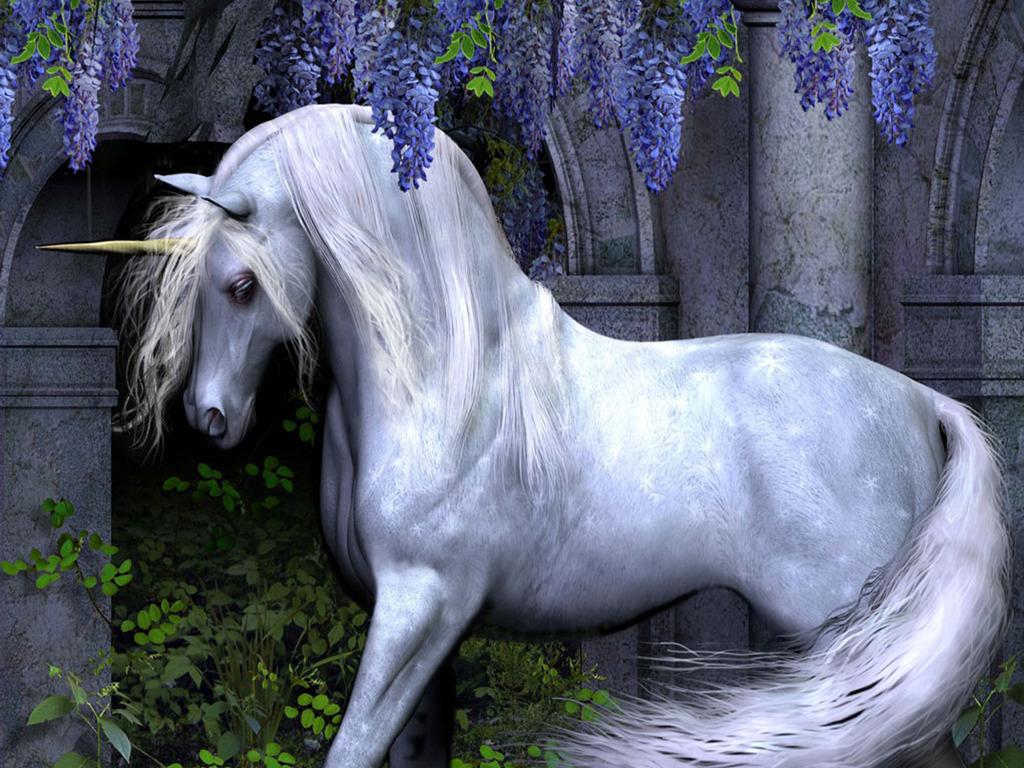 Unicorn Wallpapers  WallpaperSafari