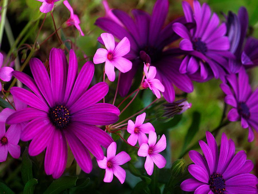 spring purple flowers Car Pictures 900x675