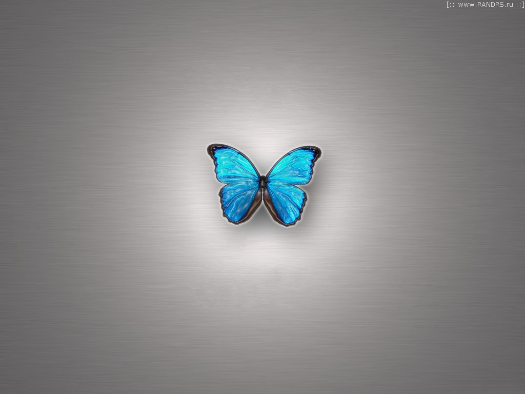 3d butterfly wallpaper download 1024x768