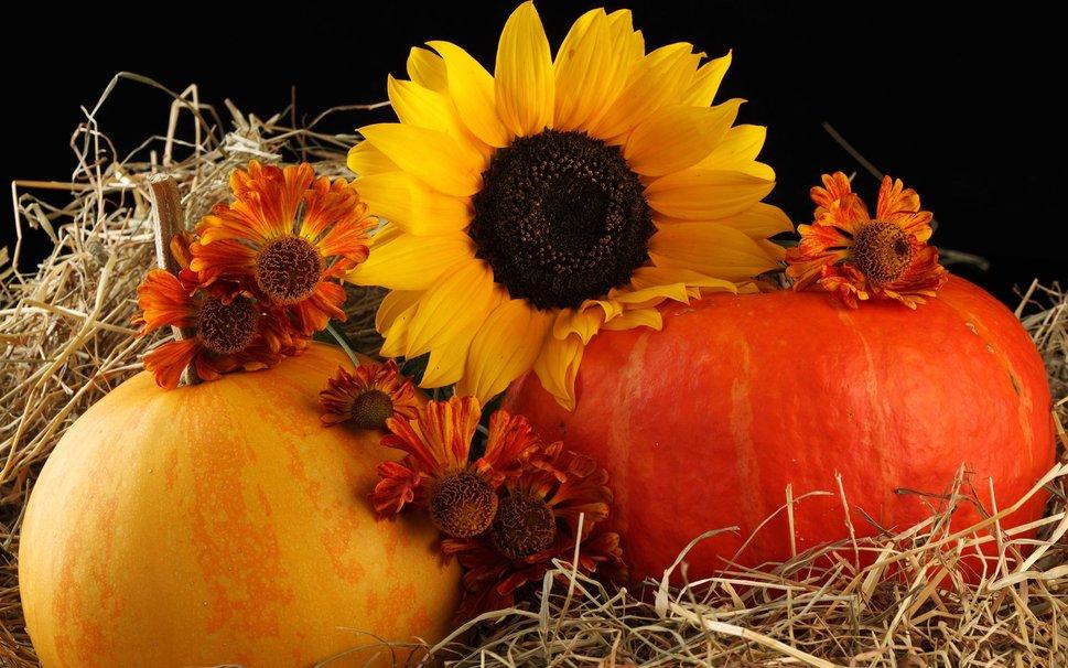 173402  pumpkin and autumn flowers pjpg 969x606