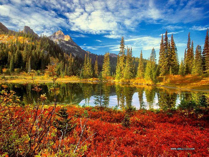 autumn scene 700x525