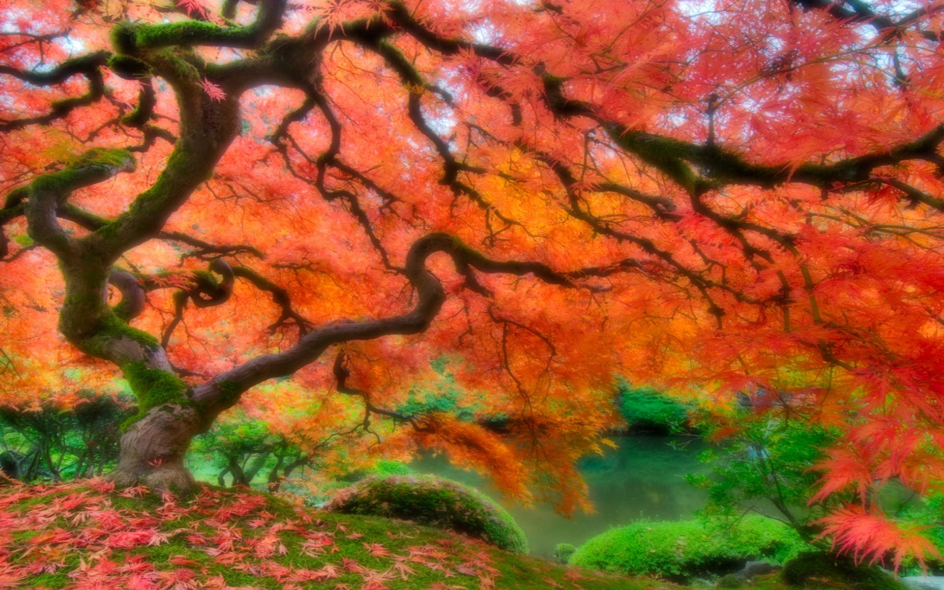 Download Japanese Garden Wallpapers Backgrounds Desktop Wallpapers 1920x1200