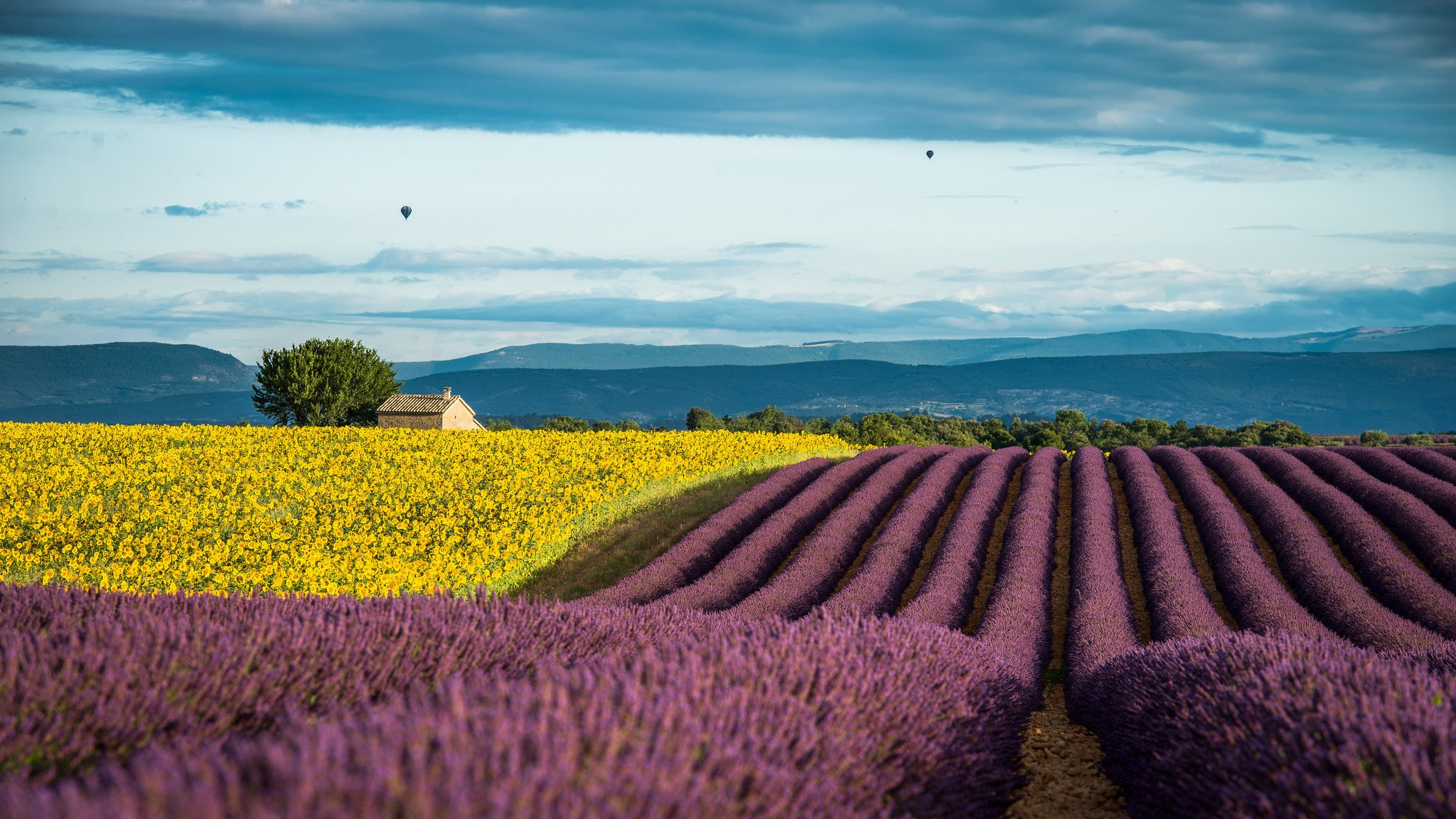 Lavender France Provence field wallpaper 2048x1152 636022 2048x1152