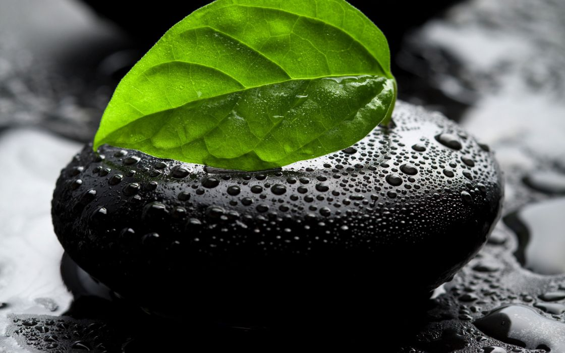 Nature leaves wet stones water drops selective coloring wallpaper 1120x700
