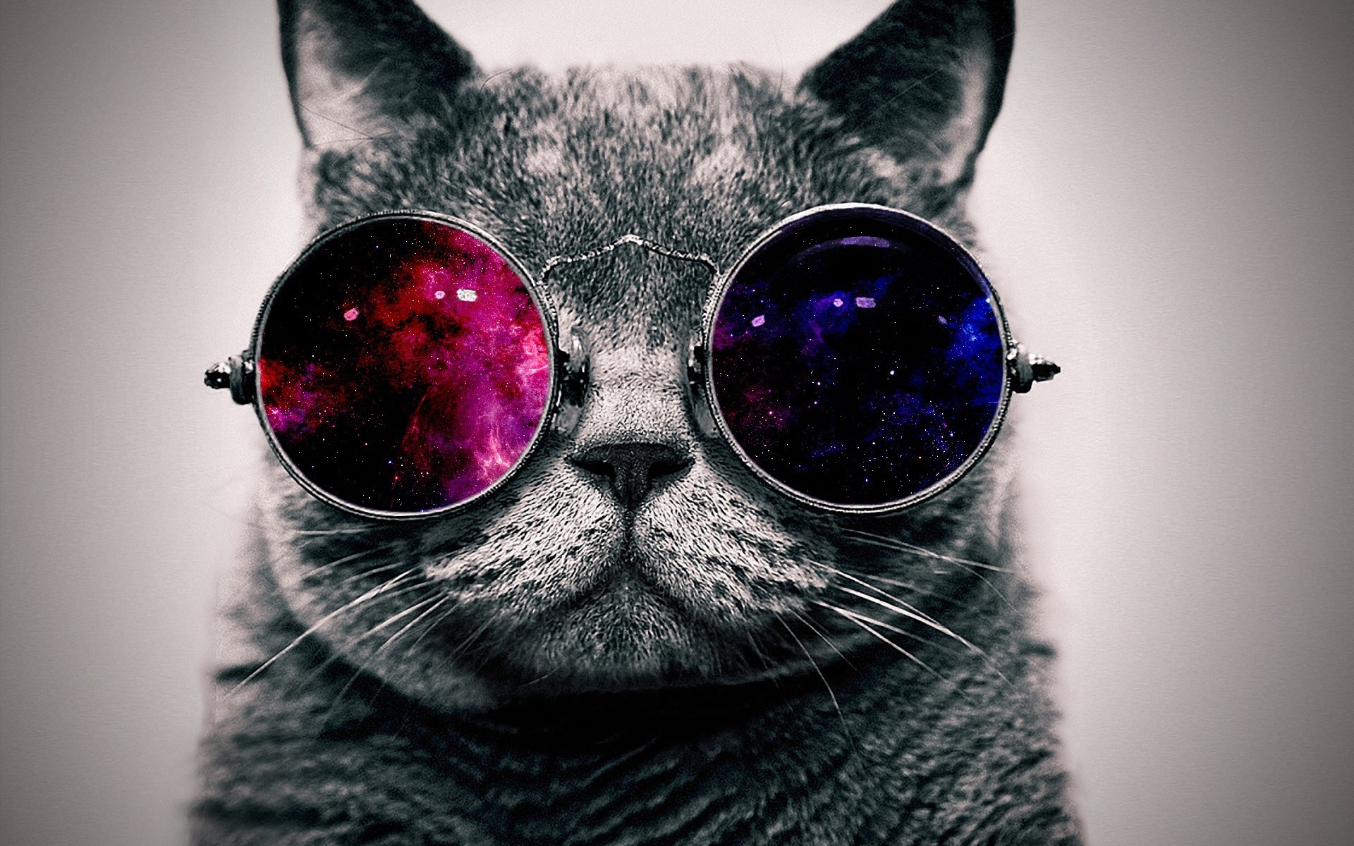 cat with cosmos glasses animal hd wallpaper 1920x1200 1233 1920x1200