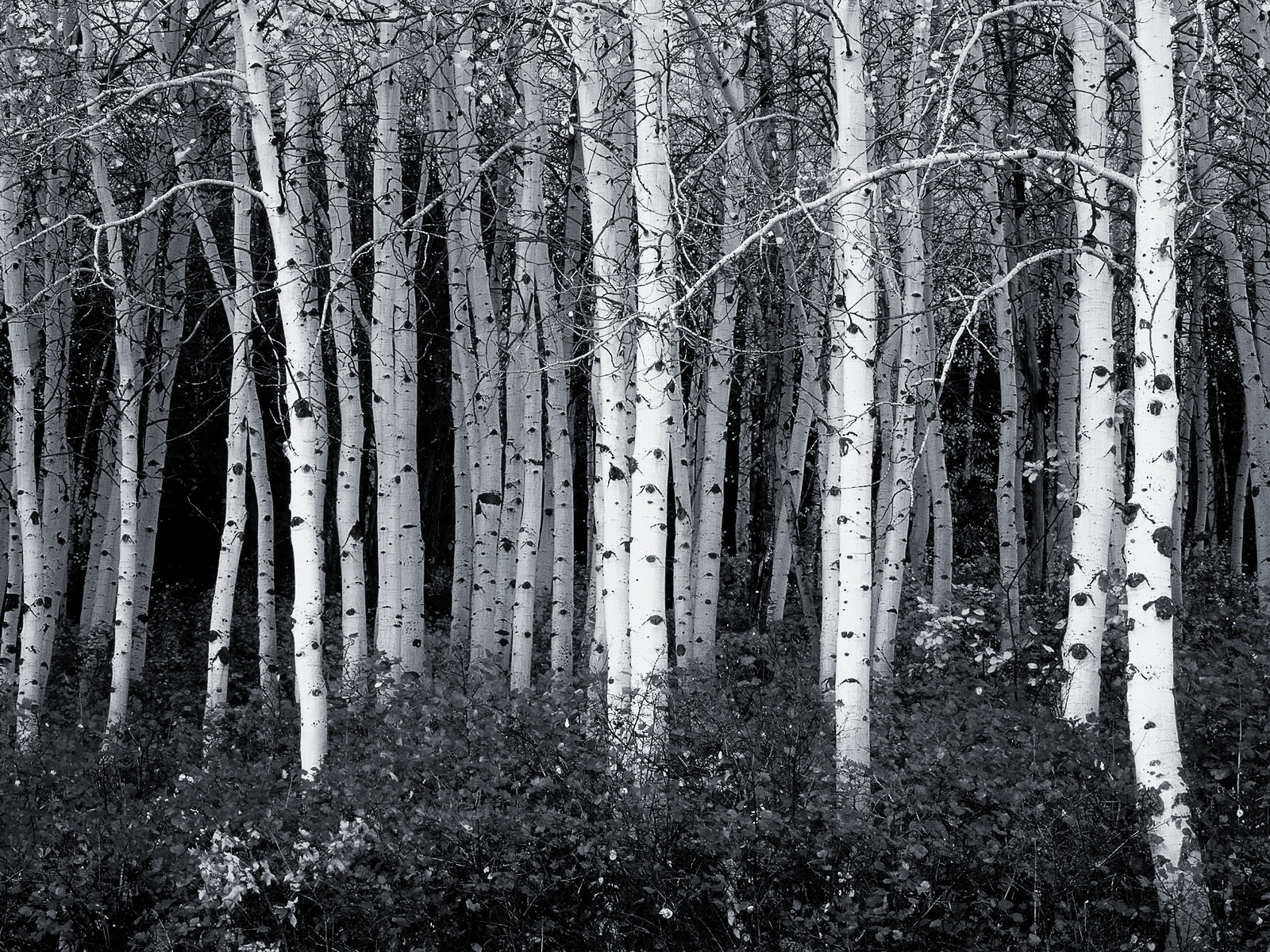 Use any of these black and white wallpapers that are designed to 1600x1200