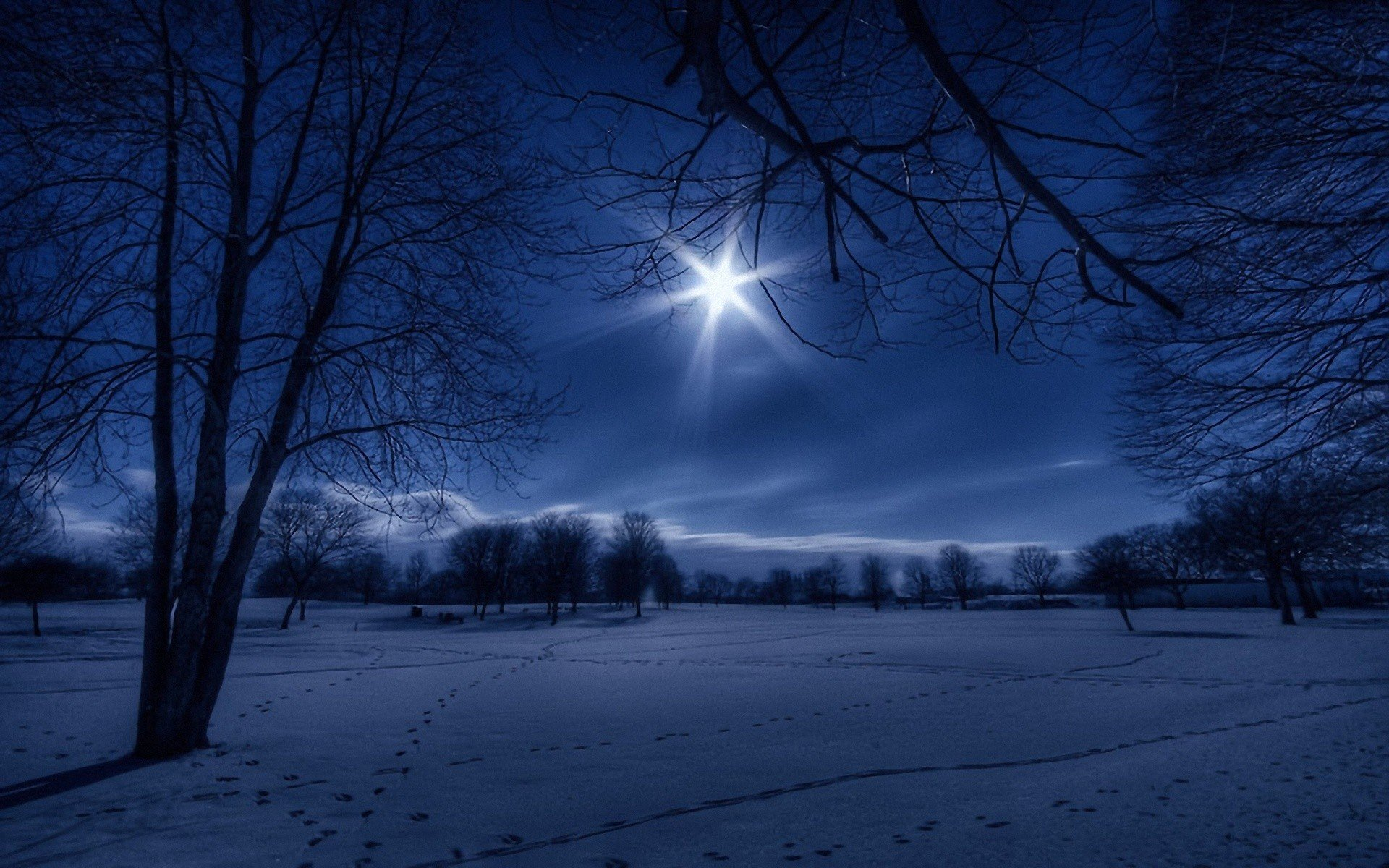 ... winter snow trees night white moonlight footprint wallpaper background
