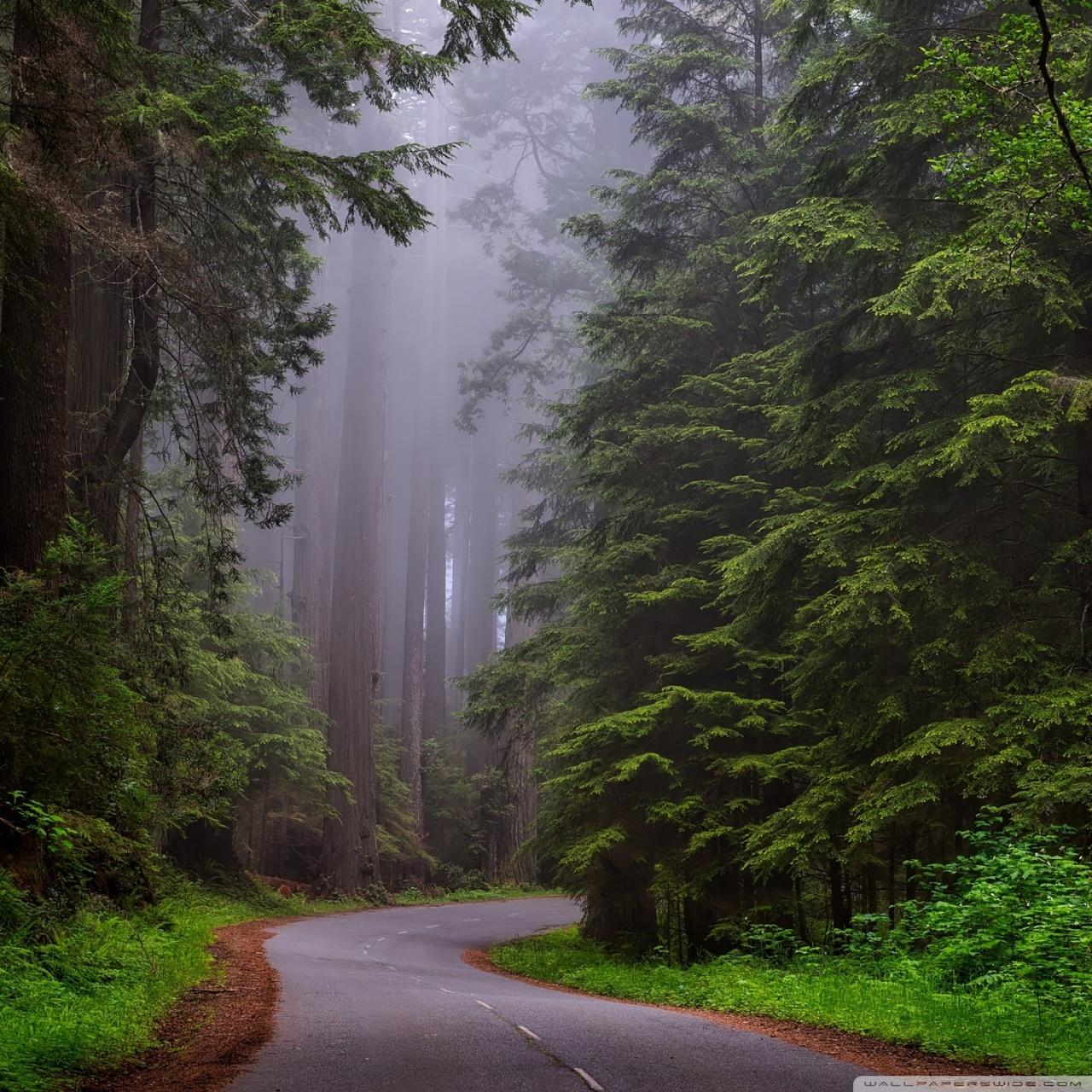 Redwood National Park California 4K HD Desktop Wallpaper for 1280x1280