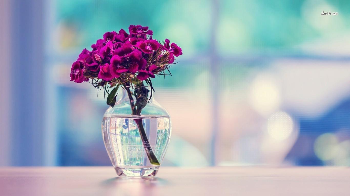 Dianthus bouquet in a vase wallpaper   Flower wallpapers   16267 1366x768