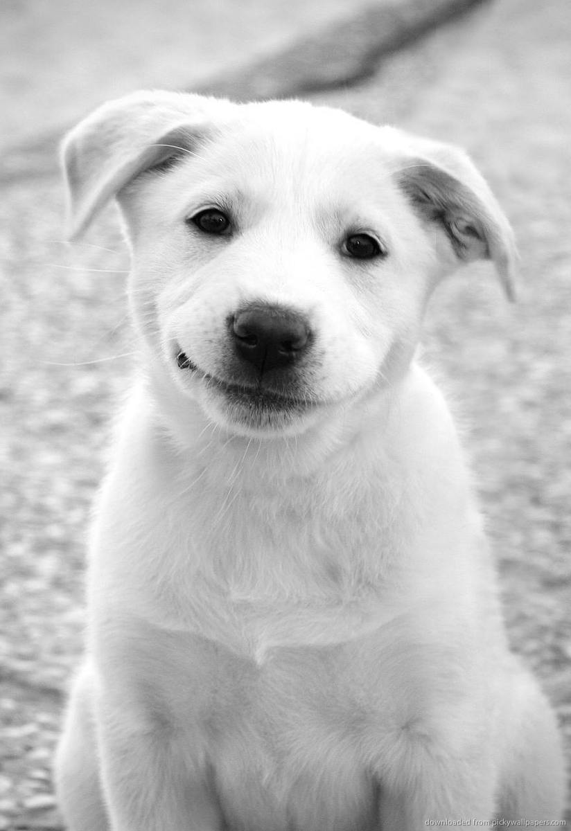 smiling dog picture and image tumblr   Quotekocom 824x1200