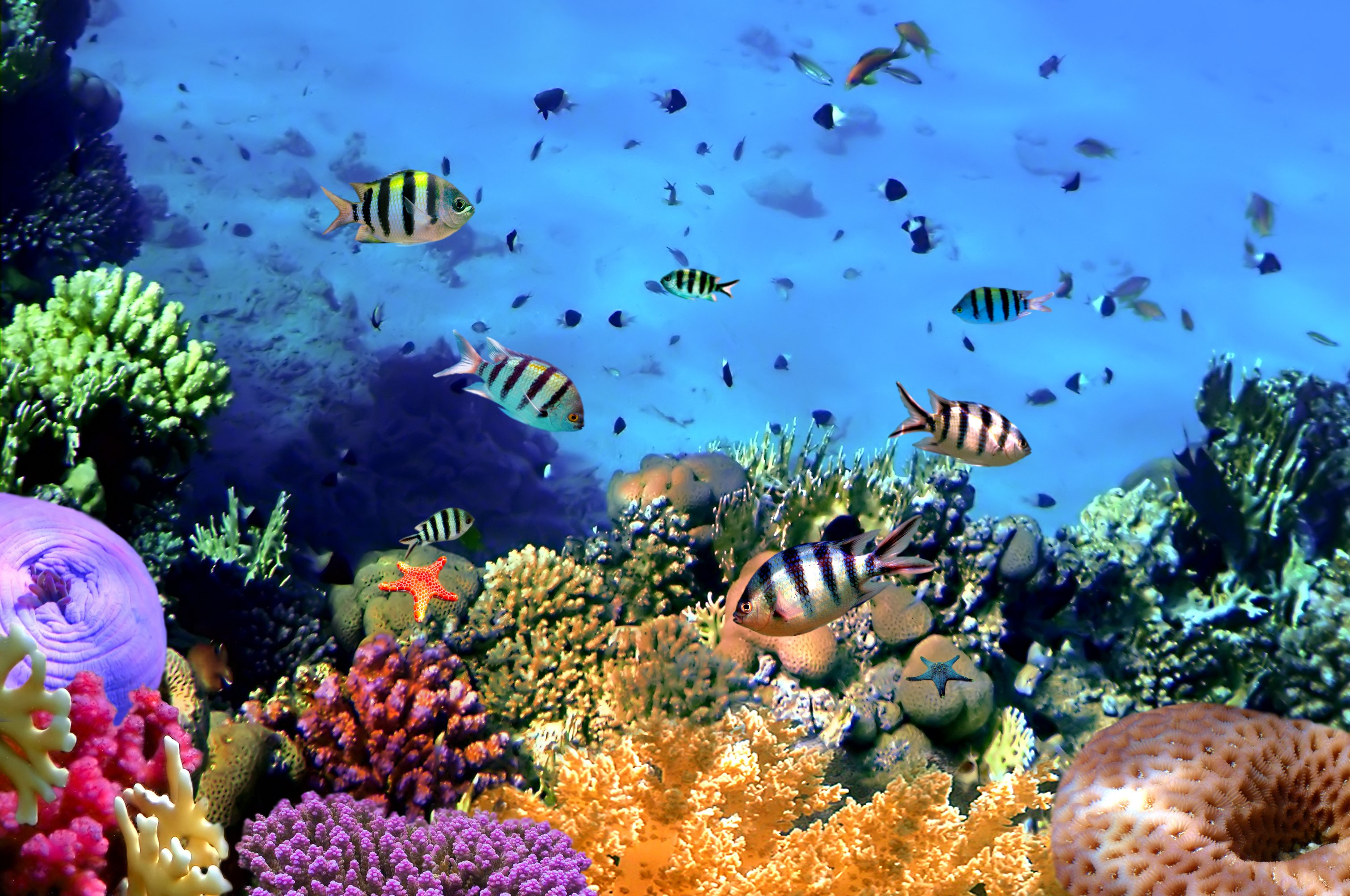 Underwater Coral Reef Wallpaper