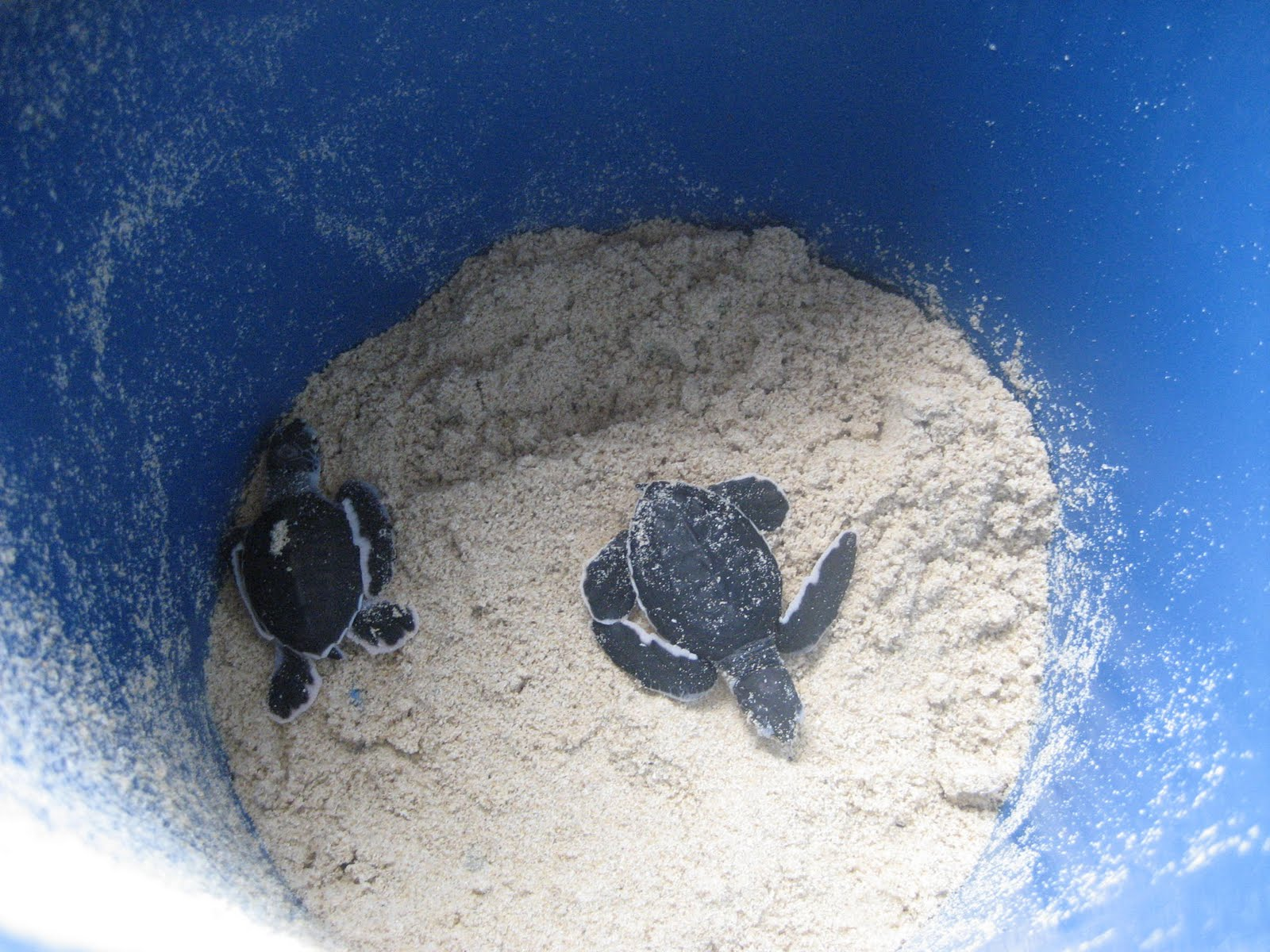 Pin Bing Baby Turtle Animal Wallpapers And Backgrounds 1600x1200