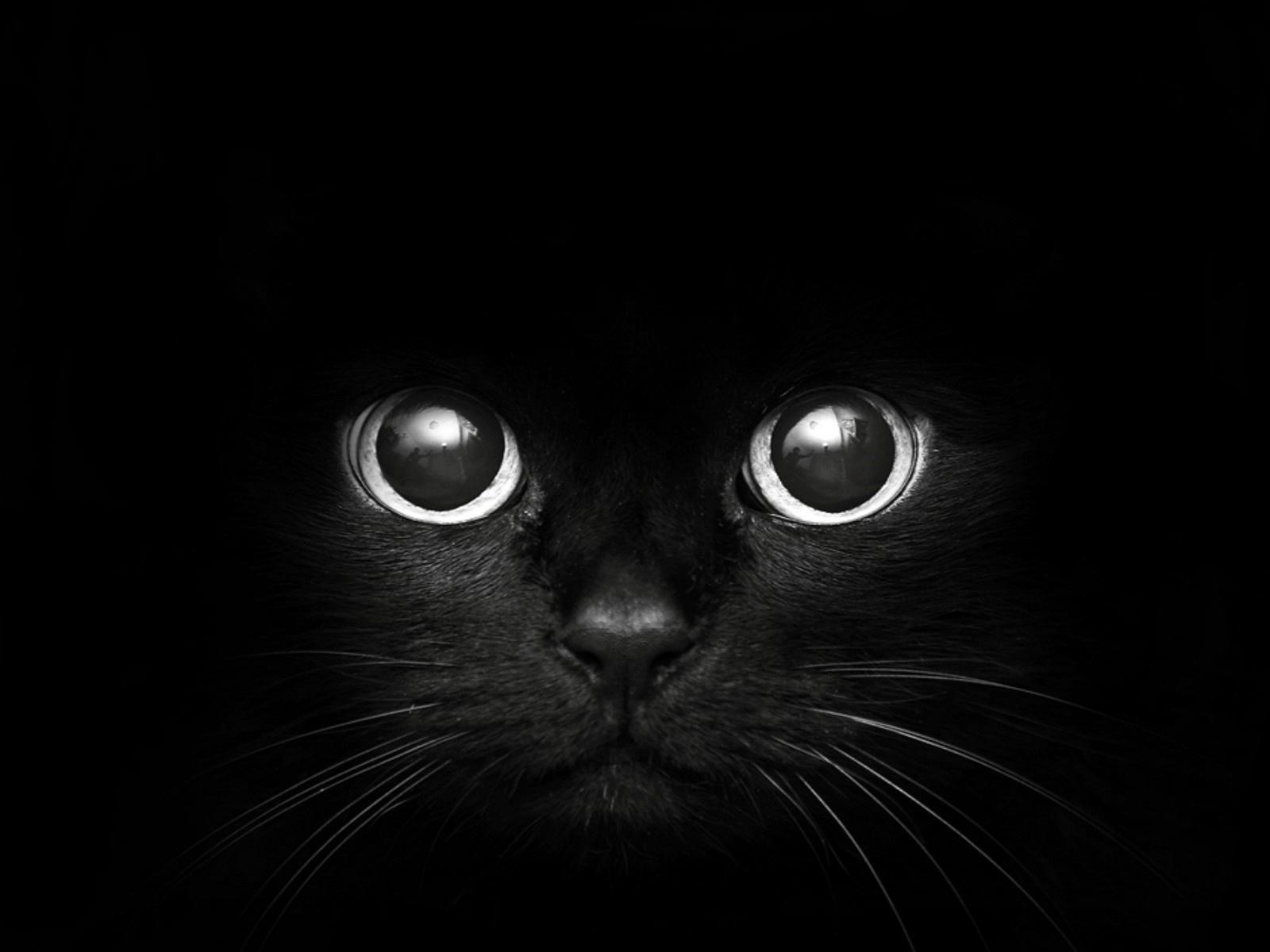 Free Download Black Eyes Wallpaper Beautiful Black Eyes Wallpapers Black Cat Eyes 1600x1200 For Your Desktop Mobile Tablet Explore 48 Black Cat Wallpaper Drawings Cats Wallpaper Cat Wallpaper 1920x1080