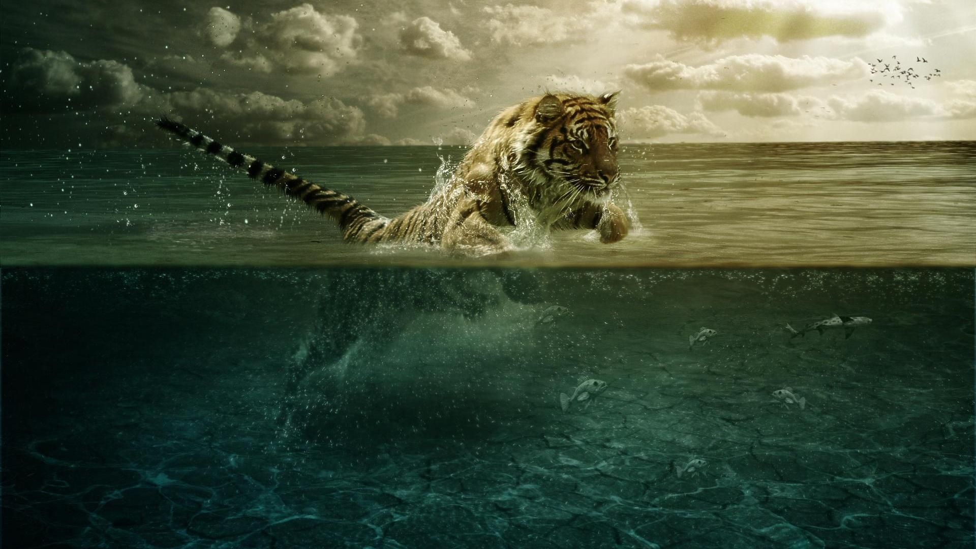 Pin by IM on Notes Tiger wallpaper Tiger pictures Animal wallpaper 1920x1080
