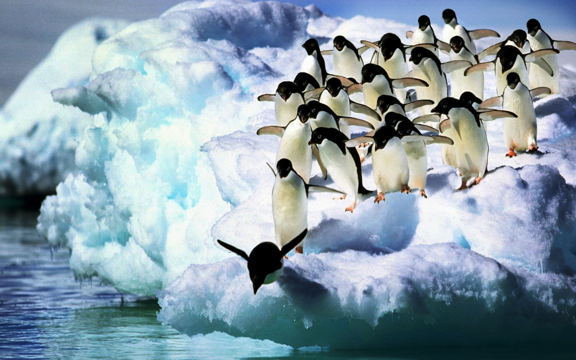 Adelie Penguins HD Wallpaper Background Image 1920x1200 ID 1920x1200