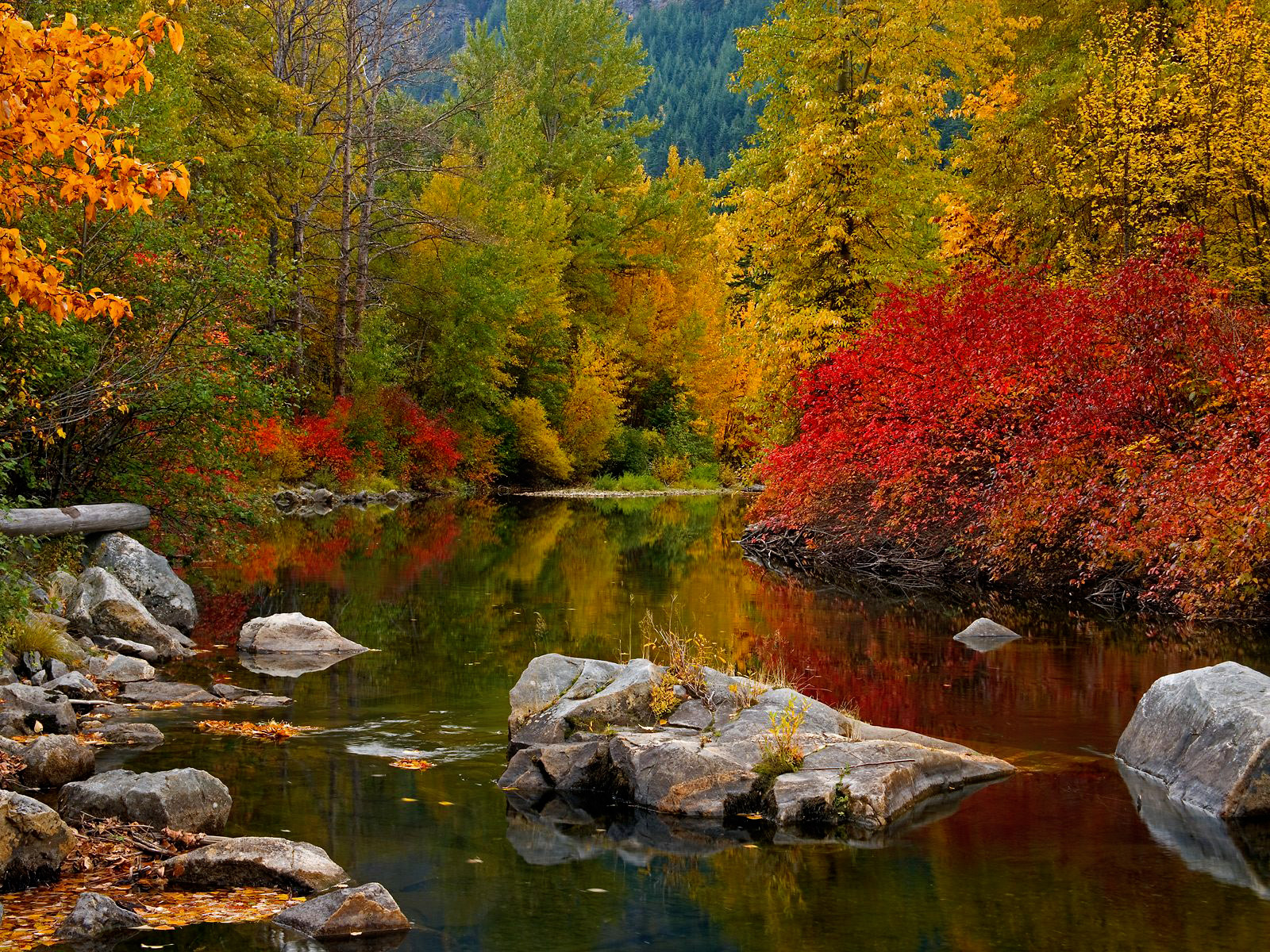 bio bing autumn wallpapers this bing wallpaper images autumn and 1600x1200