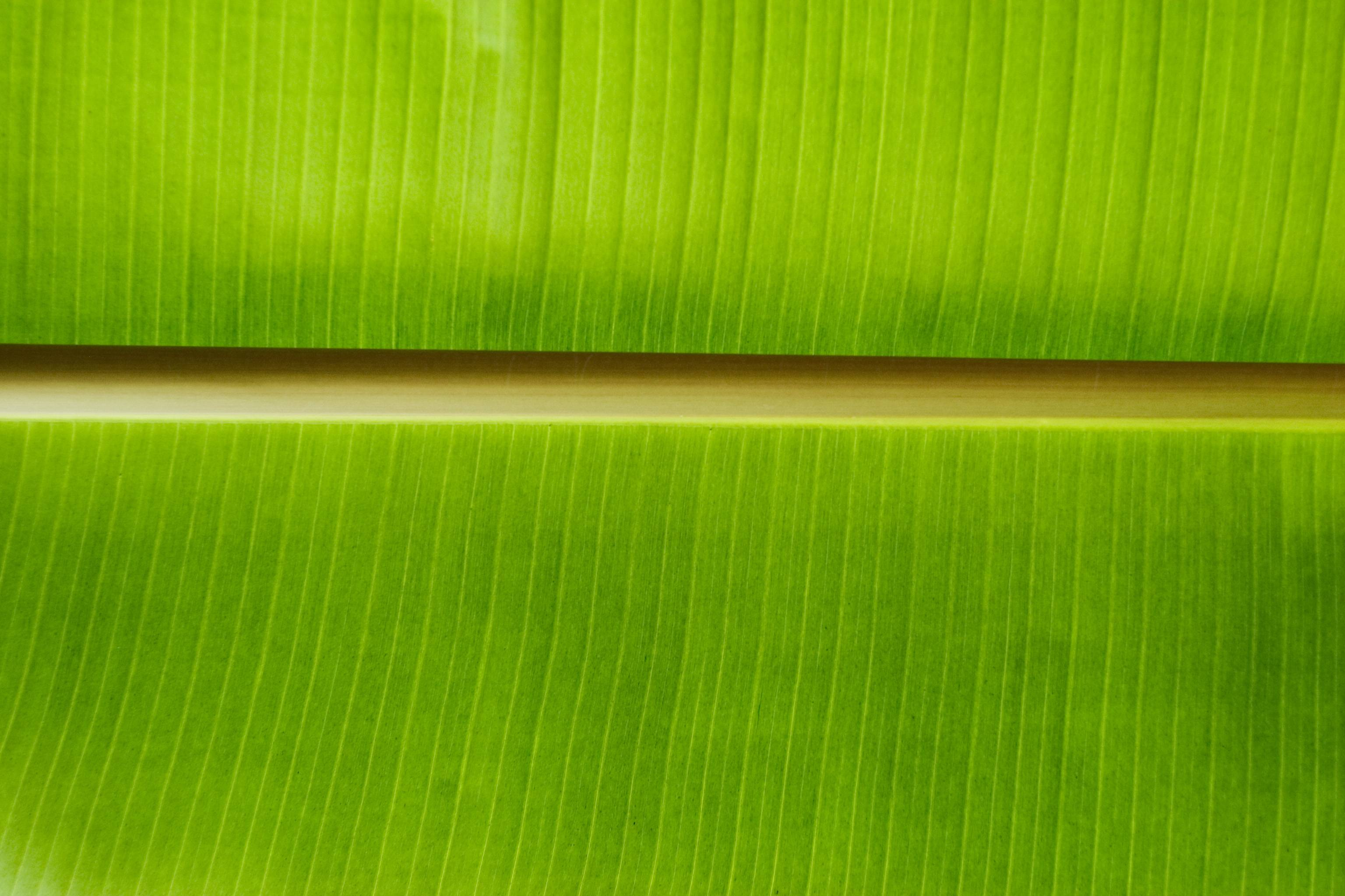 Pin Banana Leaf Wallpaper 3072x2048