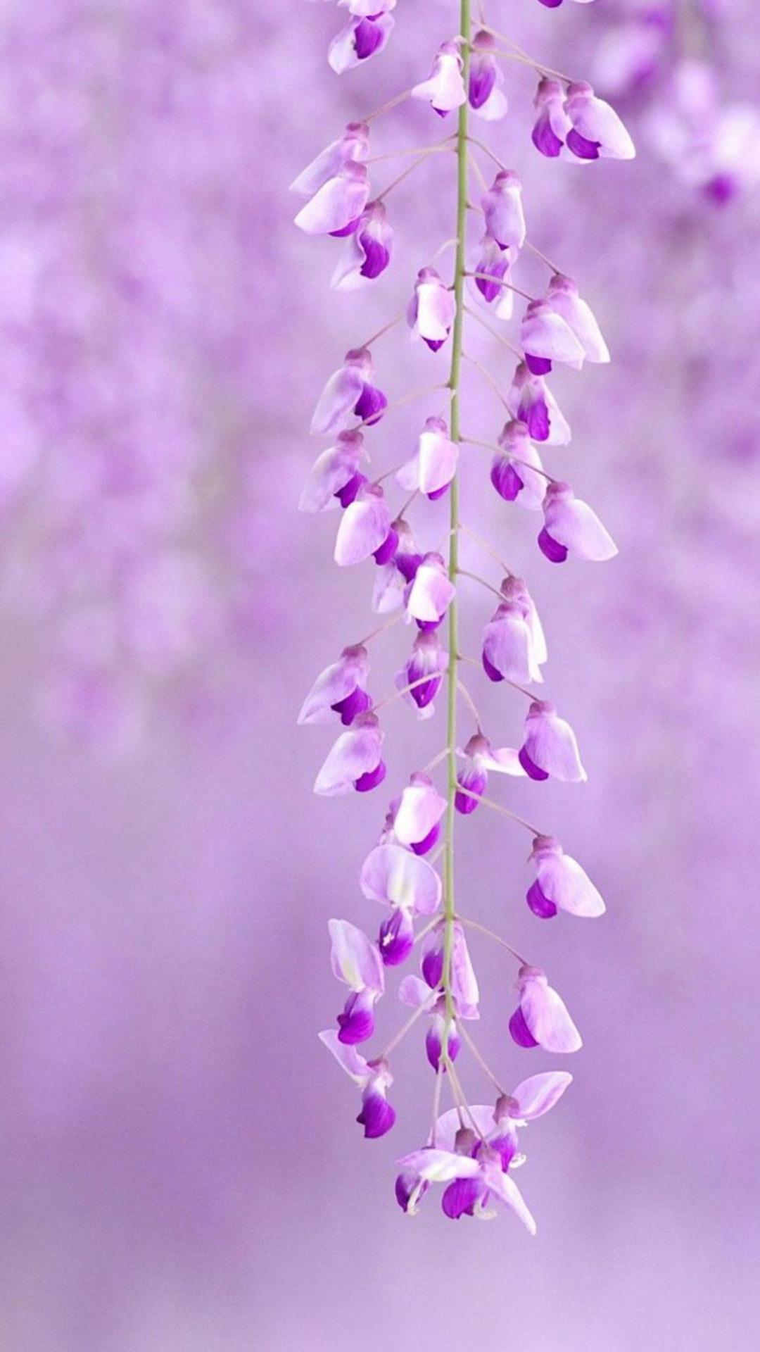 Iphone 6 plus flower wallpaper wallpapersafari - Flower wallpaper macbook ...