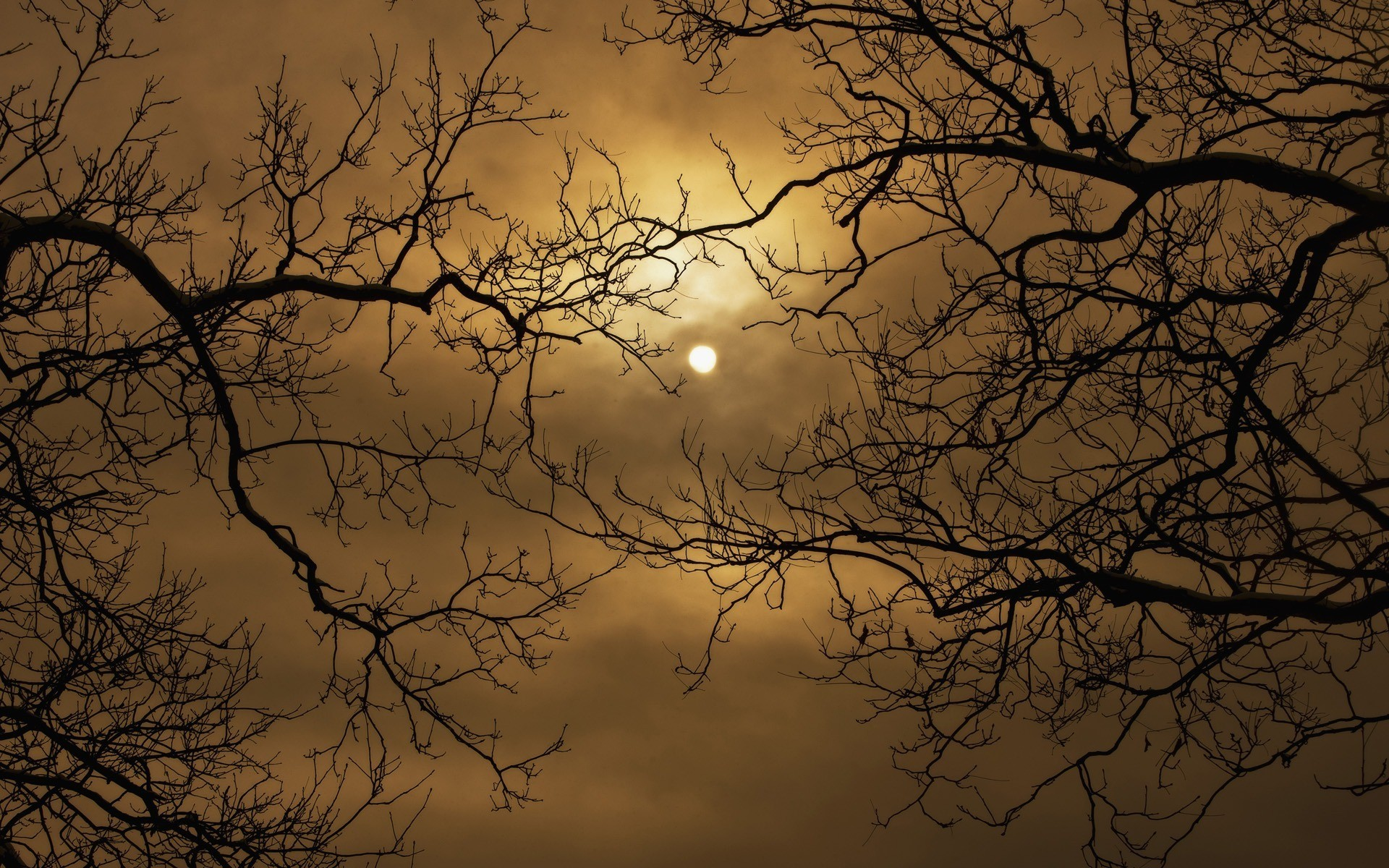 Download Sun rays through tree branches wallpaper 1920x1200
