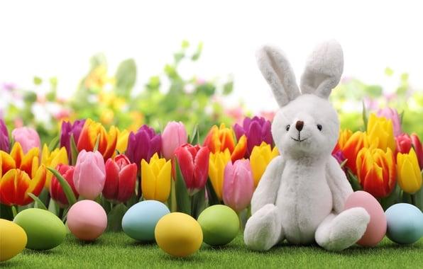 Wallpaper eggs spring flowers rabbit tulips tulips 596x380