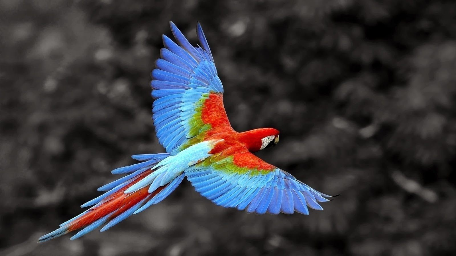 Best Pics Store Parrot HD Wallpapers 1600x900