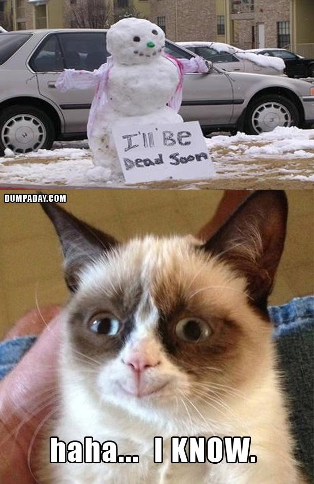 grumpy cat christmas snow man melting what makes grumpy cat happy 620x957