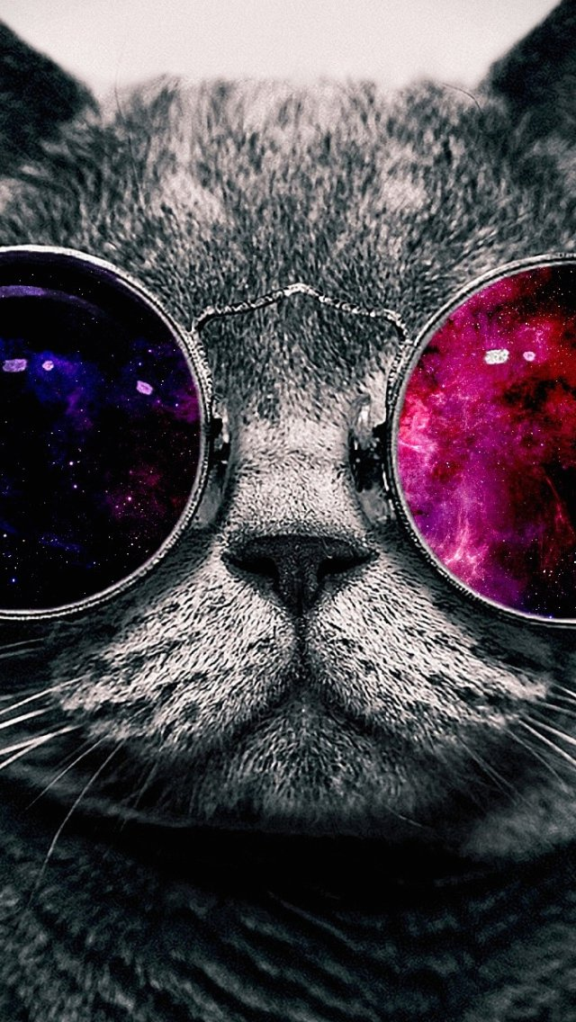Cat With Glasses Iphone Wallpaper Wallpaper iphone 5 s glasses 640x1136