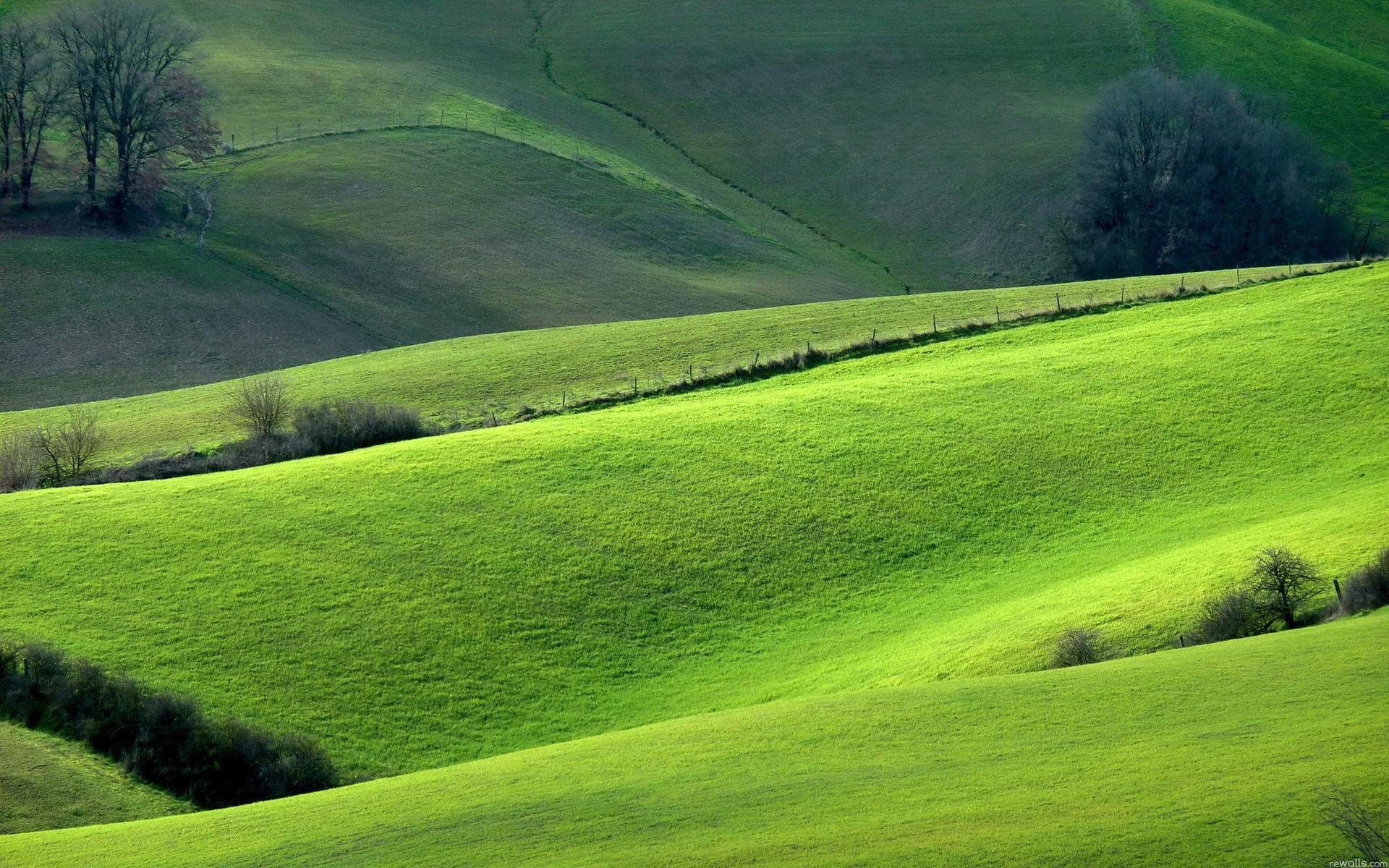 природа поле трава зеленая  № 610545 без смс