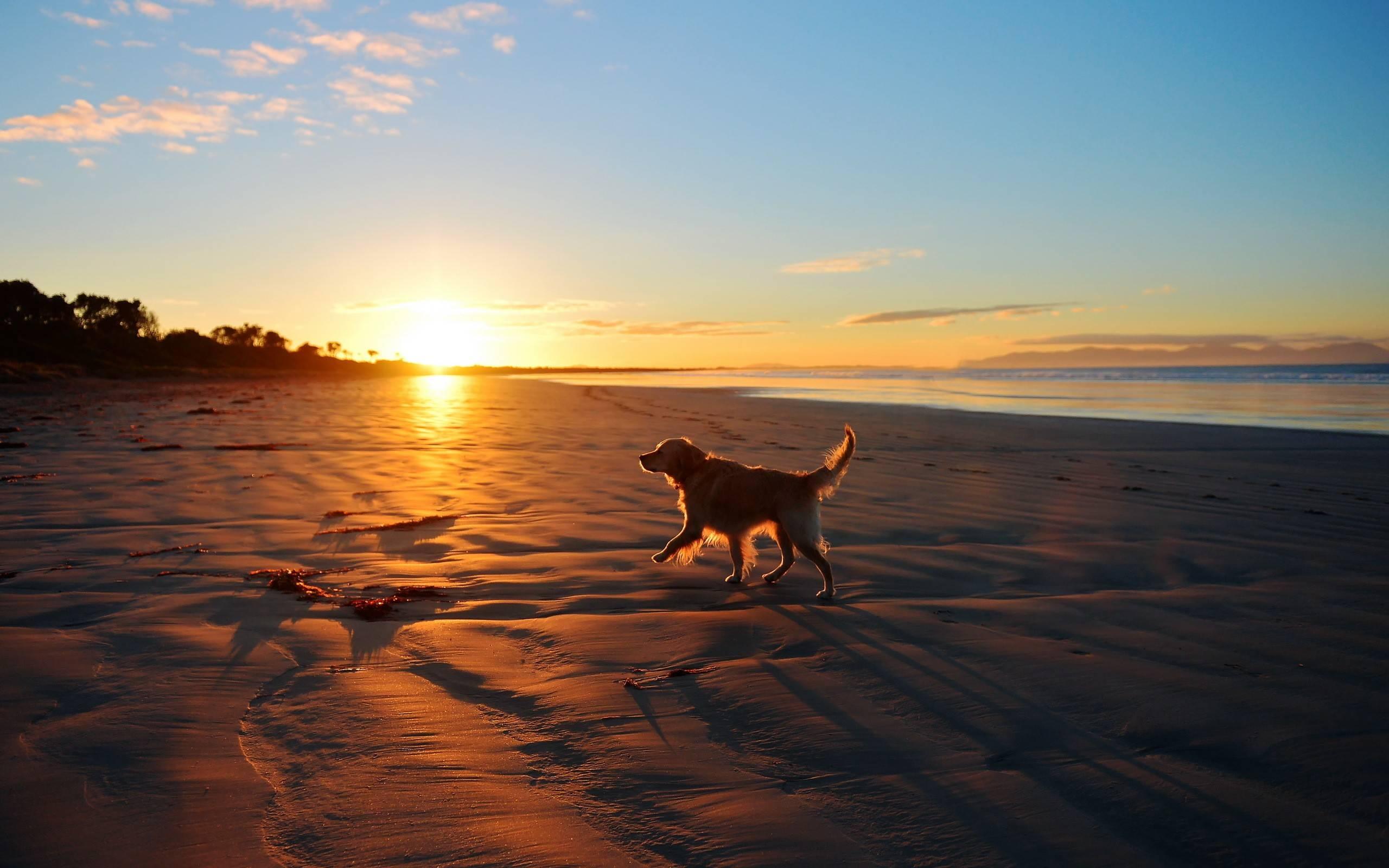 [47+] Dogs on the Beach Wallpaper on WallpaperSafari