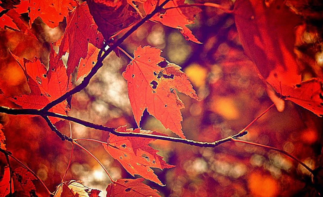 Fall Leaves Background Tumblr Latest Laptop Wallpaper 1049x640