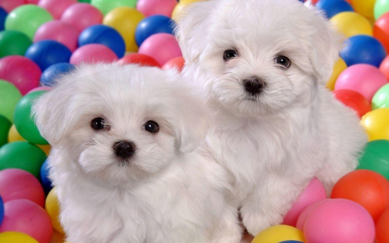 Cute Dogs And Puppies Wallpapers 1280x800