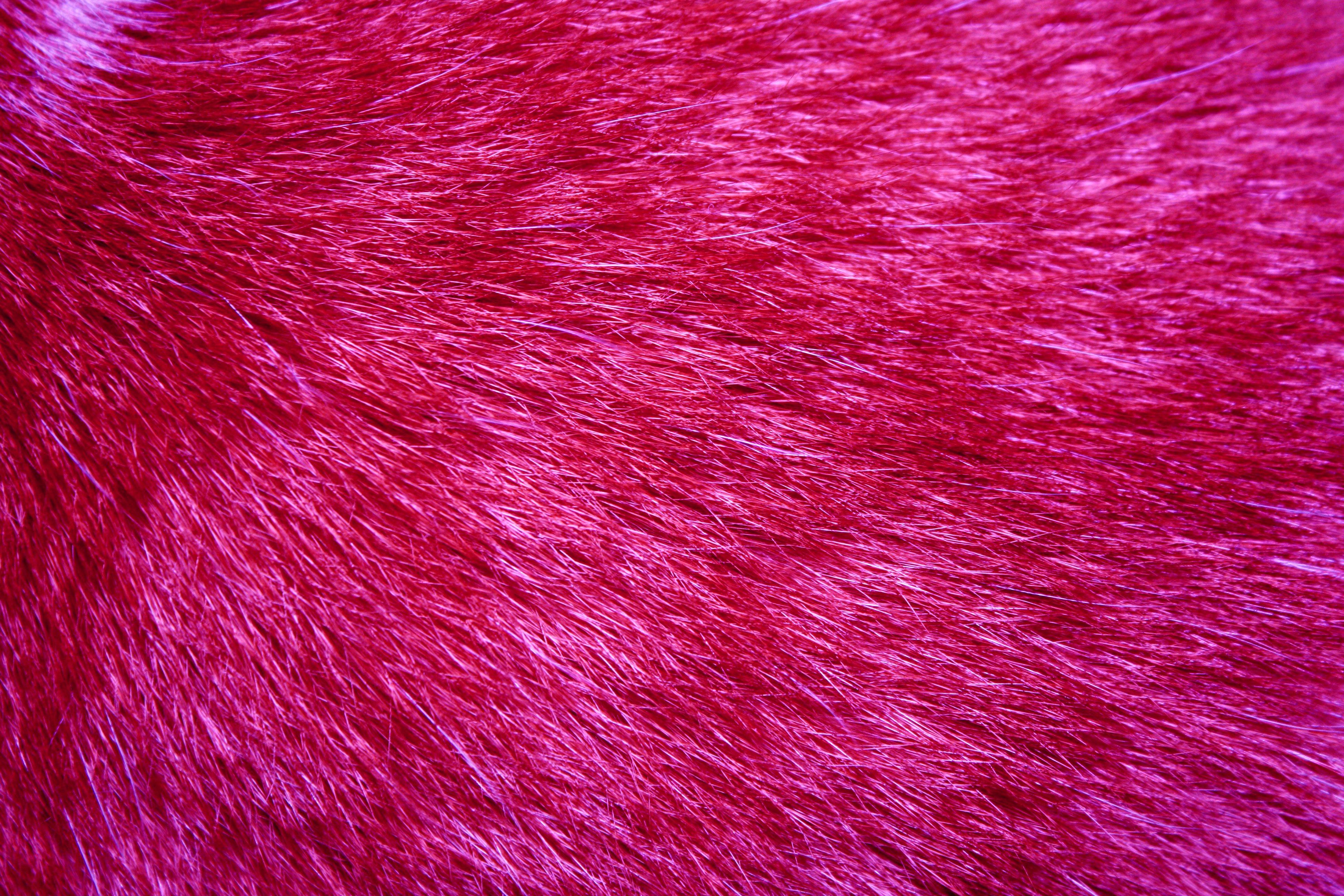 Fuchsia Fur Texture   High Resolution Photo   Dimensions 3888 3888x2592