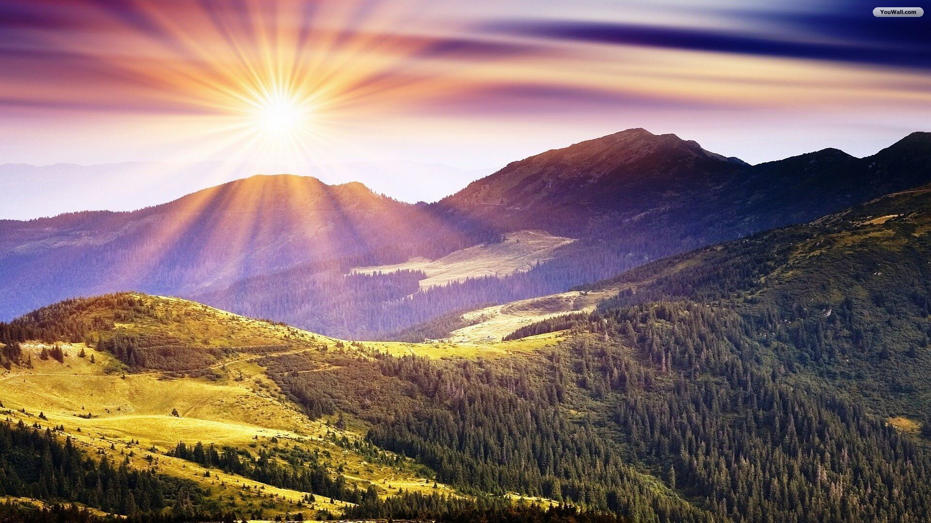 Sunny Wallpapers