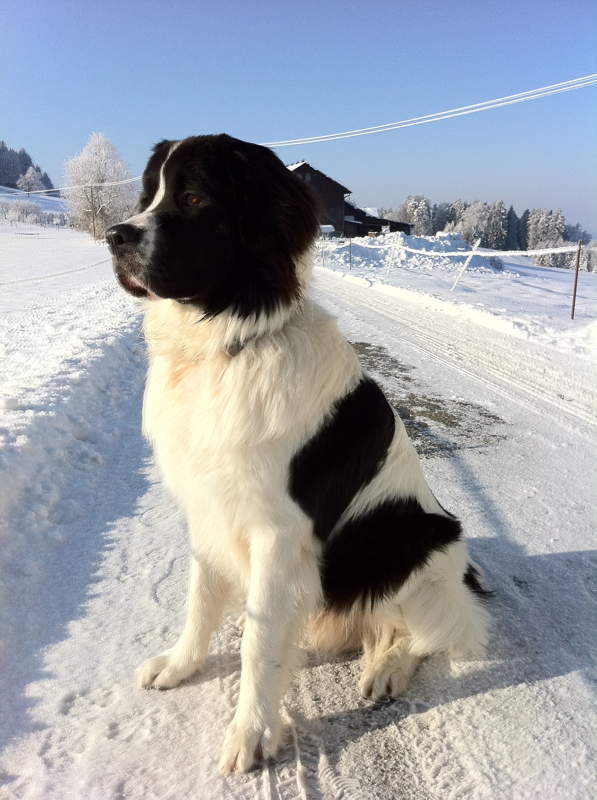 Cute Snow Dogs Images TheCelebrityPix 1936x2592