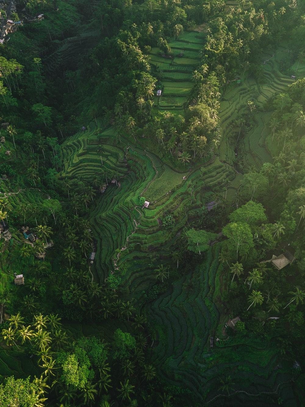 Vegetation Pictures Download Images on Unsplash 1000x1334
