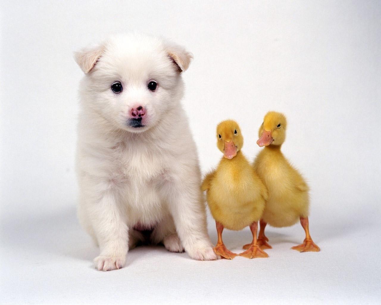 Cute Animal Wallpapers Top HD Wallpapers 1280x1024
